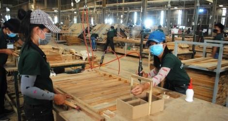 """Xây dựng khung khổ pháp luật về đấu thầu """"gỗ hợp pháp"""" (kỳ 1)"""