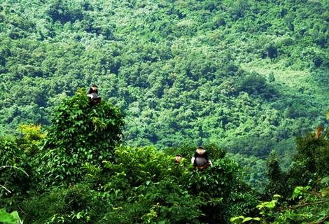 Hệ thống chính sách và hướng dẫn phân loại rừng quốc tế