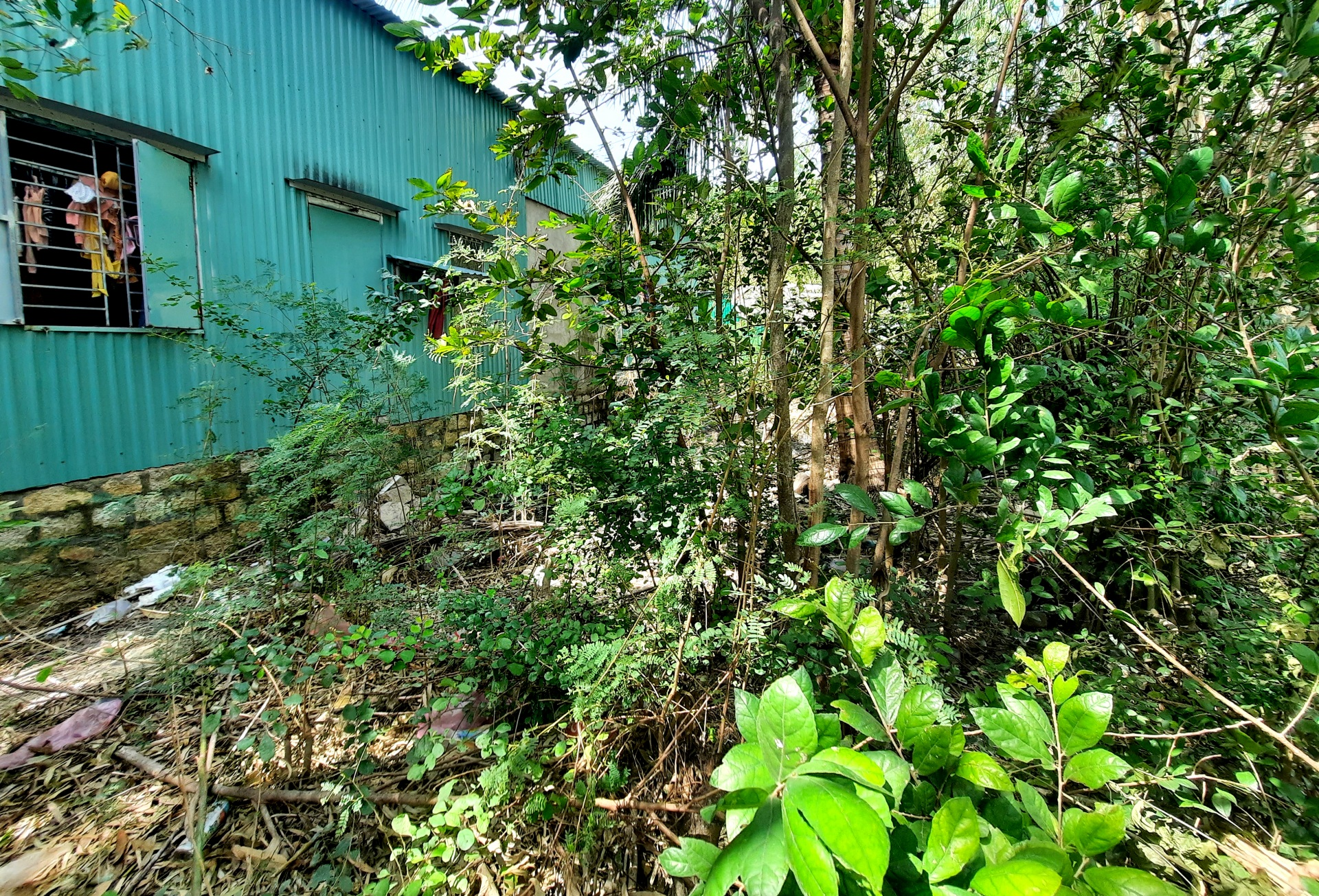 Bãi Tiên - Đường Đệ - TP Nha Trang: Khi đất có giá, lòng người đổi thay là lúc gia đình ông Tới bất an