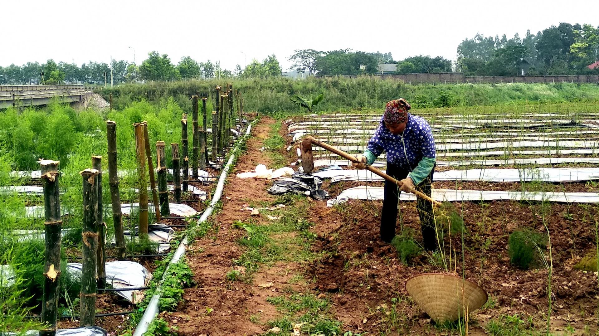 Giải quyết những khó khăn hướng tới một nền nông nghiệp phát triển