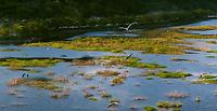 Chung tay phục hồi hệ sinh thái vì sự phát triển bền vững của mỗi quốc gia
